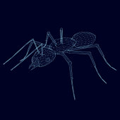 Ant wireframe