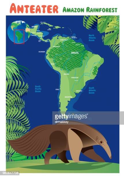 Anteater and South America