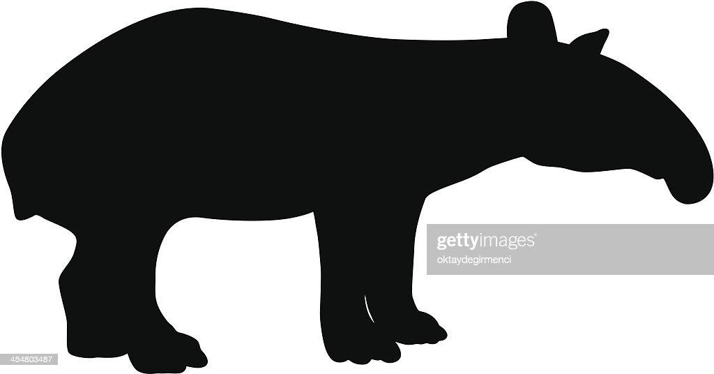 Anteater : stock illustration