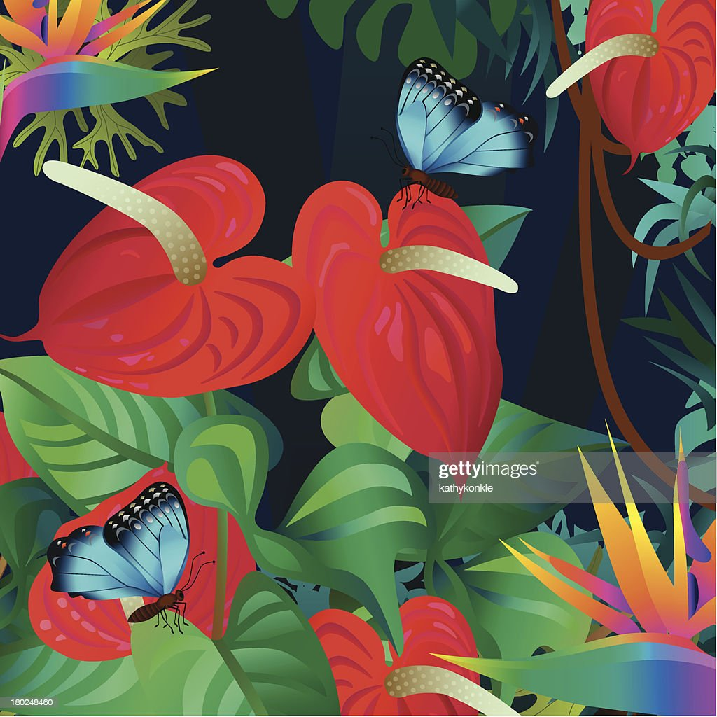 Anthurium And Morpho Butterflies stock illustration - Getty