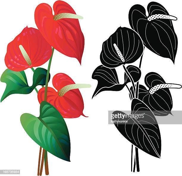 Anturio flores
