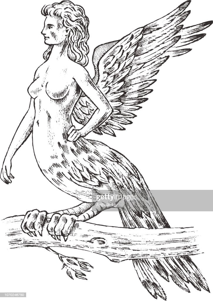 Antique Harpy. Woman Bird Eagle. Mythical Greek monster. Mythological animal. Fantastic creatures in the old vintage style. Engraved hand drawn old sketch.