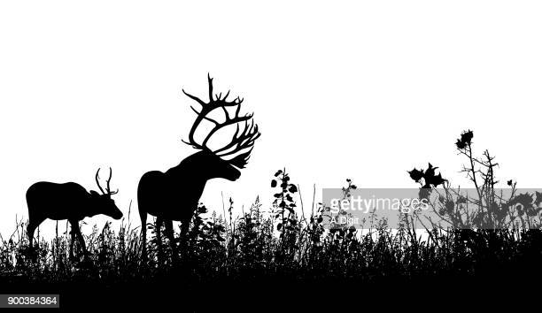 antler explorers - thistle stock illustrations, clip art, cartoons, & icons