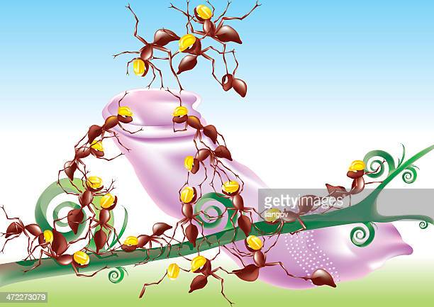 Formigas transpor em forma de preservativo
