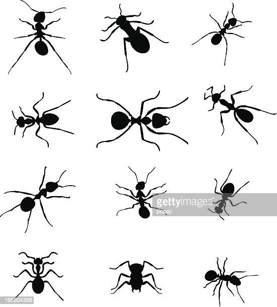 ilustraciones, imágenes clip art, dibujos animados e iconos de stock de ants siluetas. - hormiga