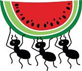 ants stealing watermelon slice