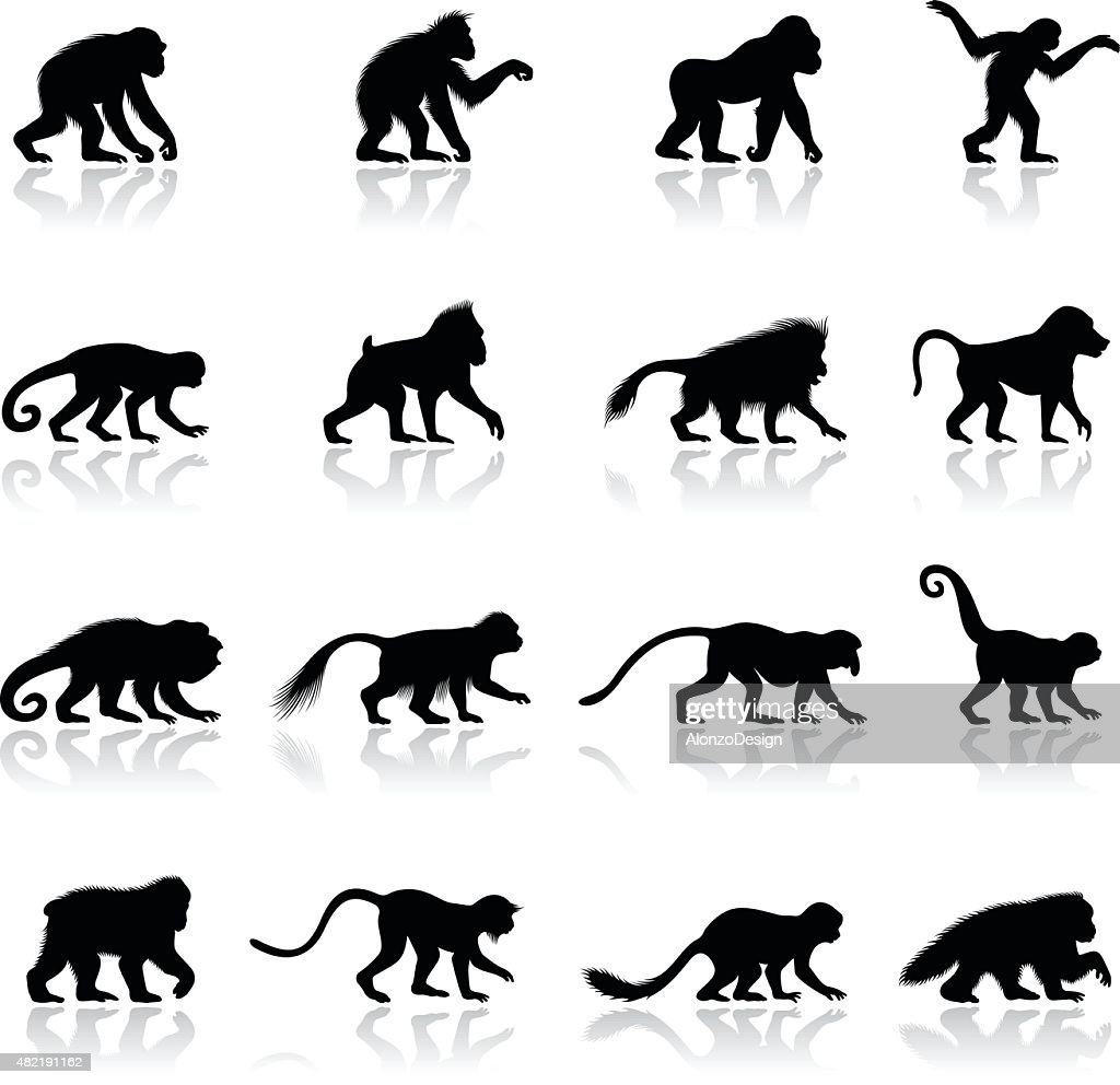 Ape and Monkey Silhouettes