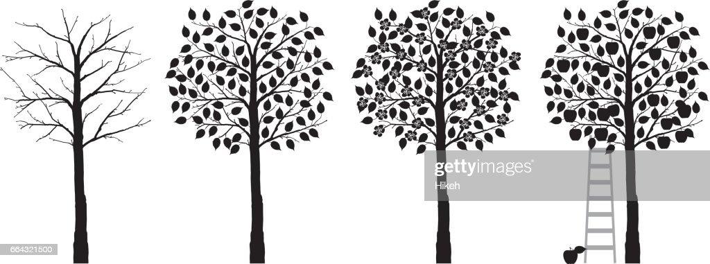 appelboom vier seizoenen