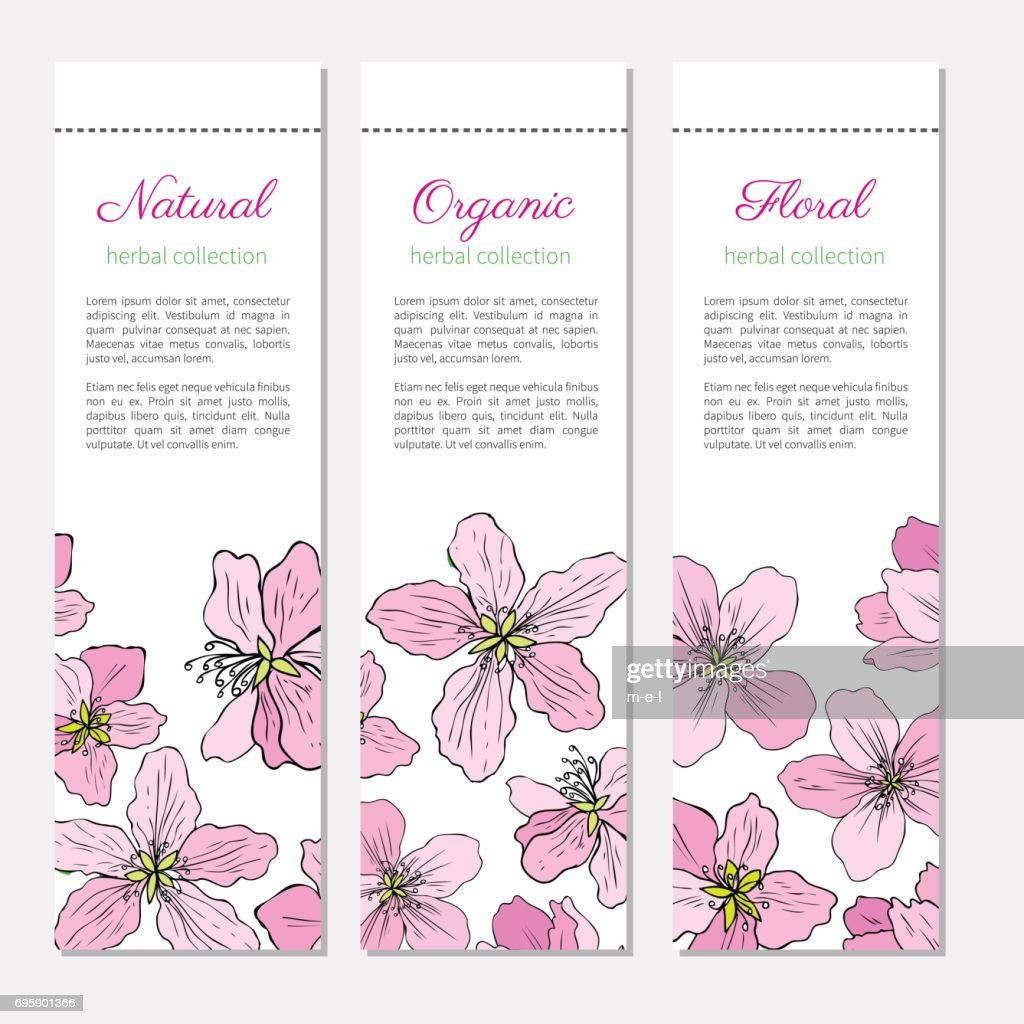 Apple blossom flower vector colorful doodle sketch hand drawn isolated on white, vintage decorative banner for greeting card, wedding invitation, cosmetic design, labels
