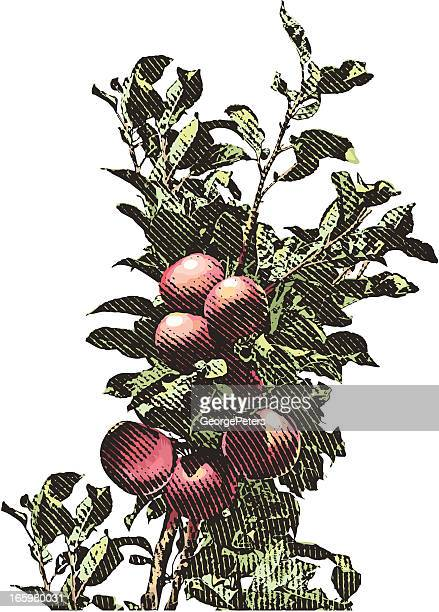 apple branch - juicy stock illustrations, clip art, cartoons, & icons