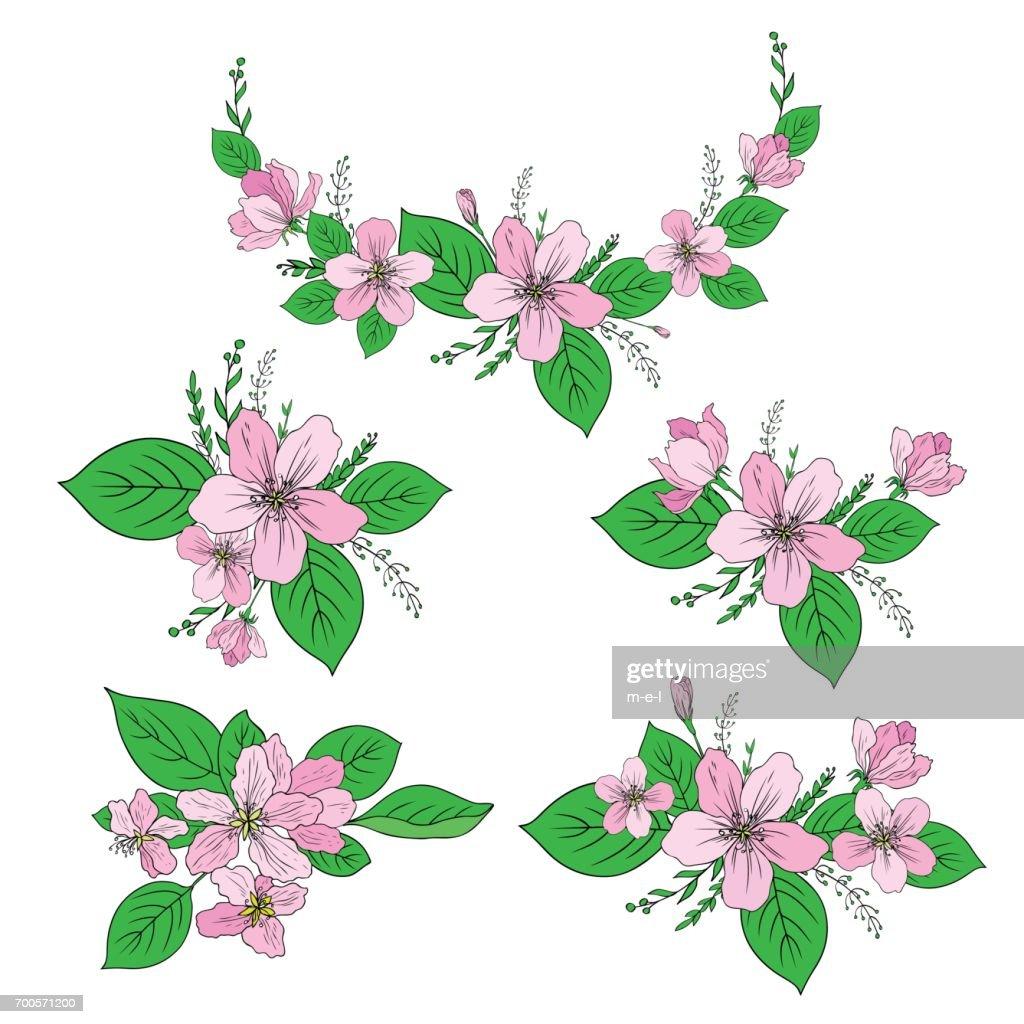 apple blumen baum blüte knospe blatt ast bunte botanische skizze