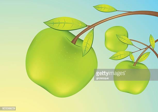 アップルのフルーツ