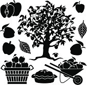 apple tree and apples