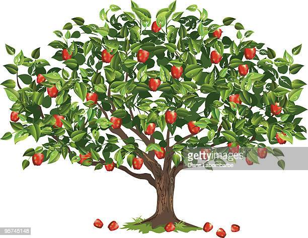 stockillustraties, clipart, cartoons en iconen met apple tree filled with ripe fruit ready for harvest - appelboom