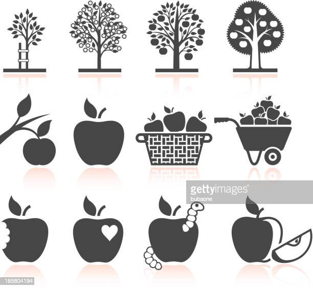 Apple Tree Growing and organic farming black & white icons