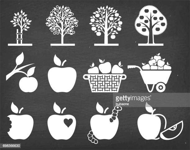 stockillustraties, clipart, cartoons en iconen met apple boom groeit en biologische landbouw vector icon set - appelboom