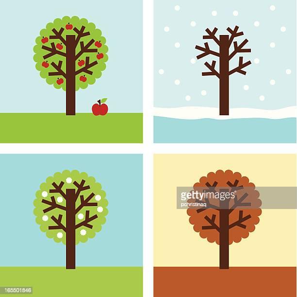 illustrations, cliparts, dessins animés et icônes de pommier seasons - les 4 saisons