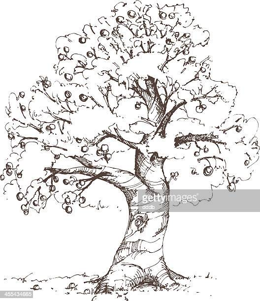 stockillustraties, clipart, cartoons en iconen met apple tree sketch - appelboom