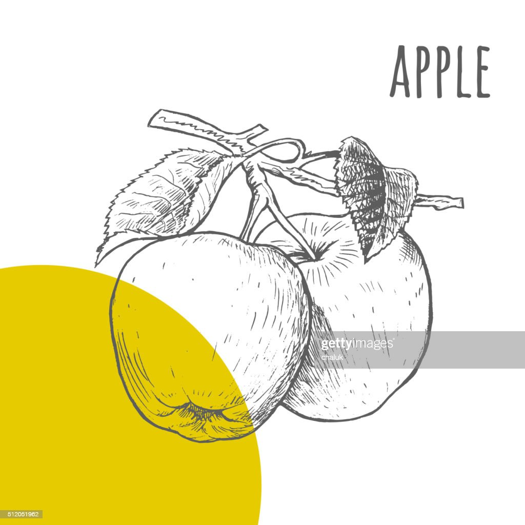 Apple vector freehand pencil drawn sketch