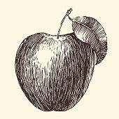 Apple Vintage Engraved Illustration Hand Drawn