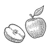 Apple whole and half with leaf. Vintage black engraving