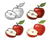 Apple whole and half with leaf. Vintage color engraving and flat