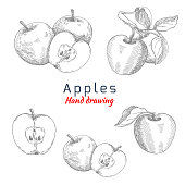 Apples, vector hand drawing