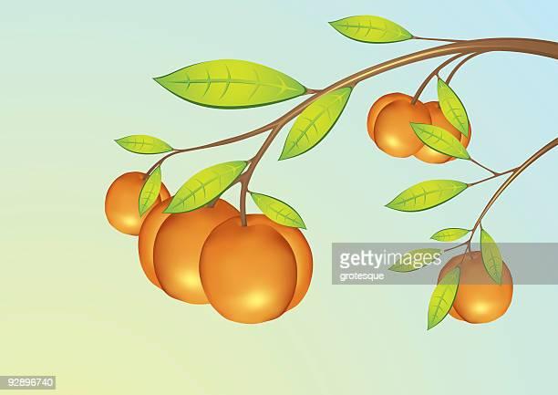 Abricot-Fruits