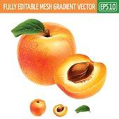 Apricot on white background. Vector illustration
