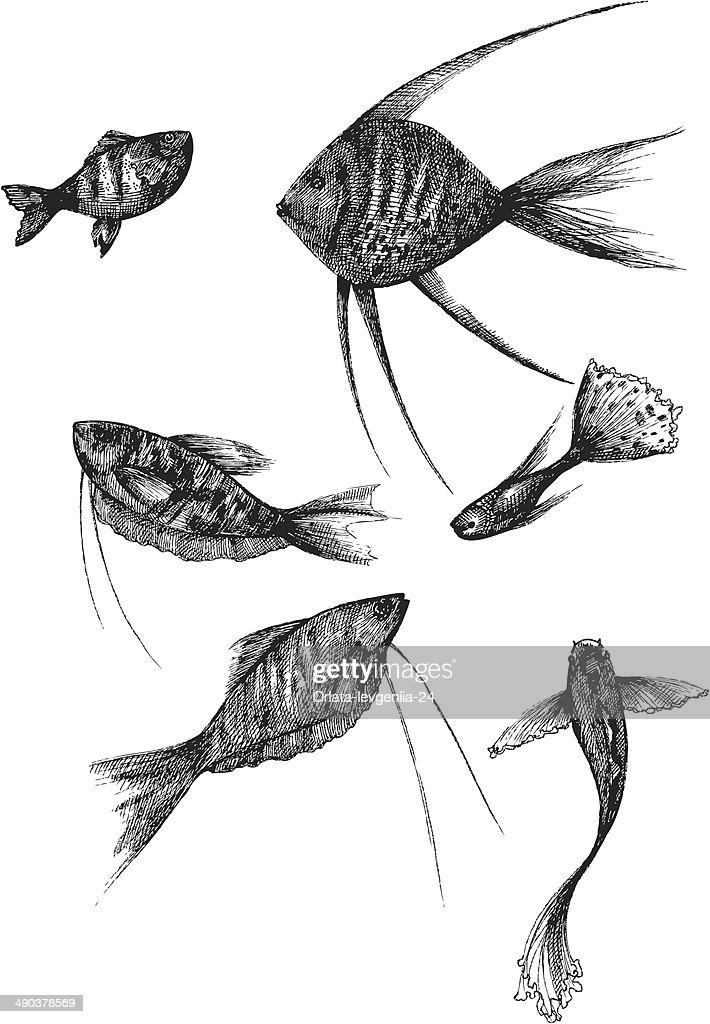 Aquarium Fish Vector Illustration Vector Art Getty Images