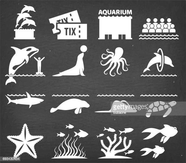 aquarium vector icons set on black chalkboard - killer whale stock illustrations, clip art, cartoons, & icons