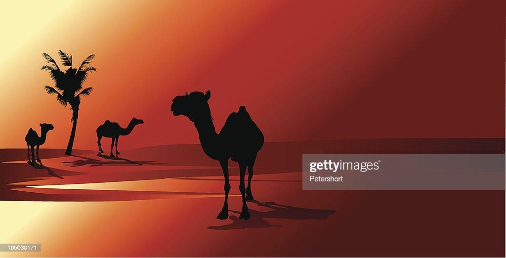 アラビアの夕日 : ストックイラストレーション