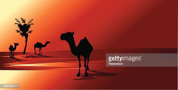 Arabian la puesta de sol
