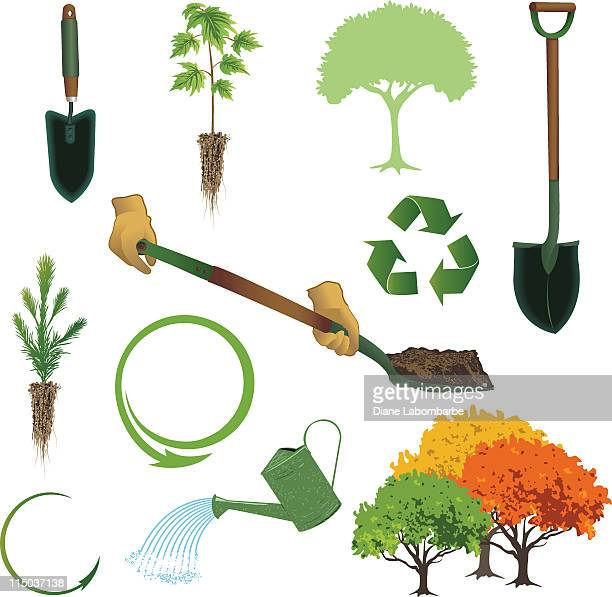 arbor day collection - coniferous tree stock illustrations, clip art, cartoons, & icons