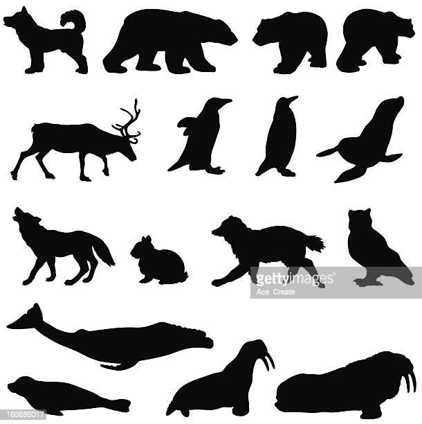 Arctic animals in a silhouette set