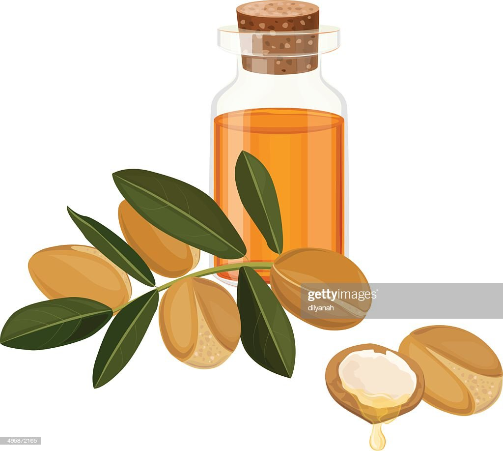 argan oil vector illustration