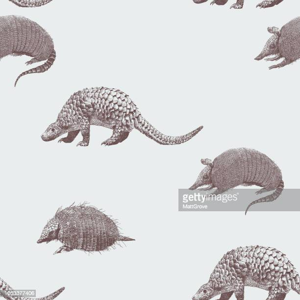 illustrazioni stock, clip art, cartoni animati e icone di tendenza di armadillo seamless repeat pattern - pangolino