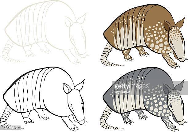 armadillo - armadillo stock illustrations
