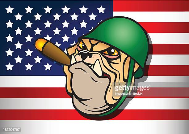 us army bulldog mascot - marines military stock illustrations, clip art, cartoons, & icons