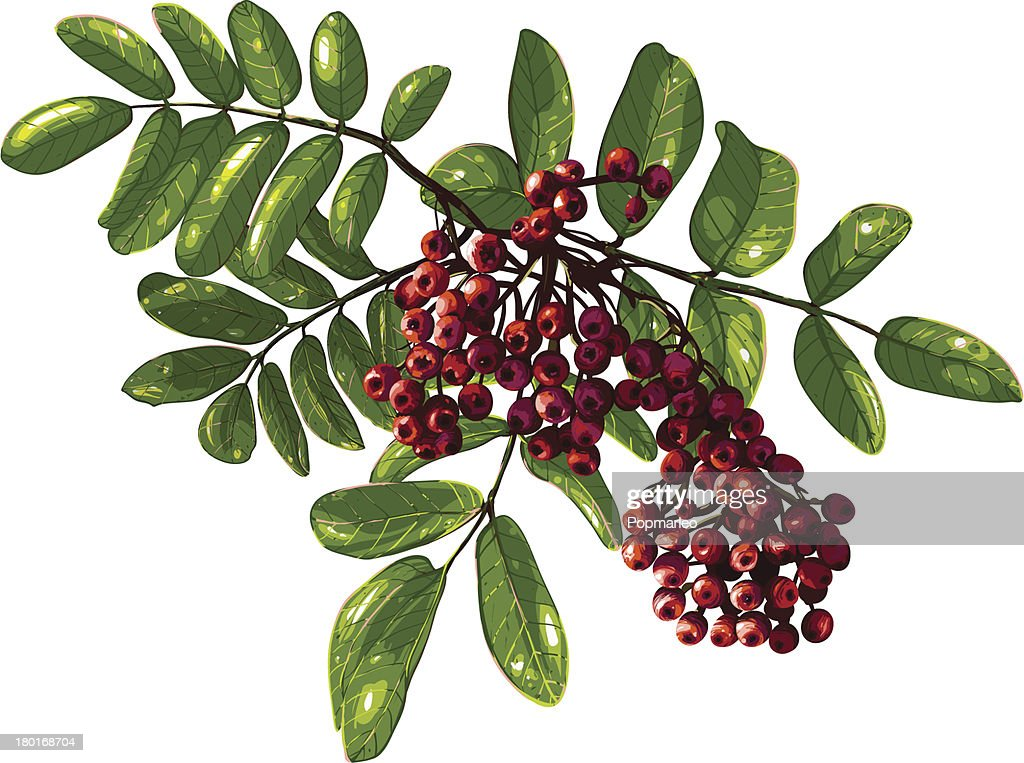 Ashberry Branch Composition with Berries and Leaves