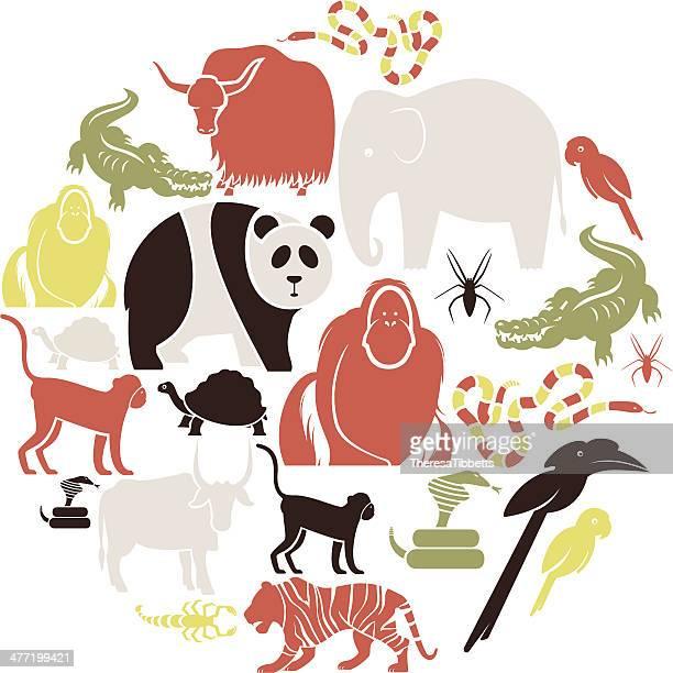 ilustraciones, imágenes clip art, dibujos animados e iconos de stock de asian conjunto de animales. - cobra