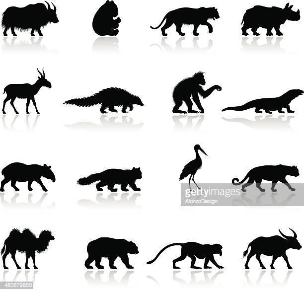 asian animal silhouettes - komodo dragon stock illustrations