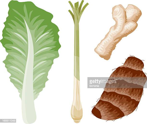 asian ingredients - bok choy stock illustrations, clip art, cartoons, & icons