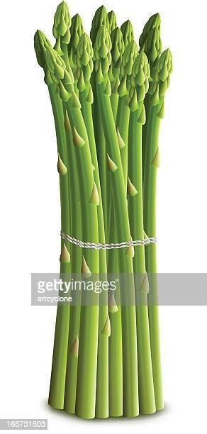 asparagus bundle - asparagus stock illustrations, clip art, cartoons, & icons