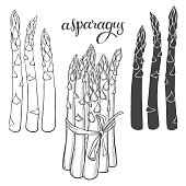 Asparagus. Isolated vector hand-drawn elements for your design.