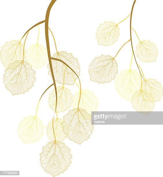 aspen autumn branches - aspen tree stock illustrations, clip art, cartoons, & icons