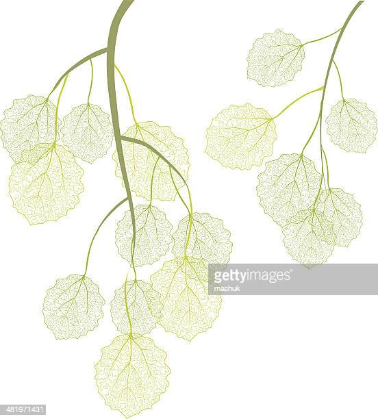 aspen branches - aspen tree stock illustrations