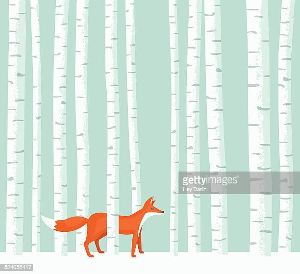 aspen fox - animal stock illustrations