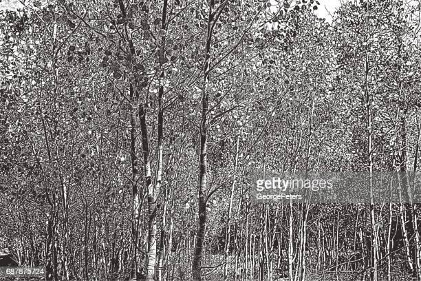 aspen grove, colorado plateau. autumn - aspen tree stock illustrations, clip art, cartoons, & icons
