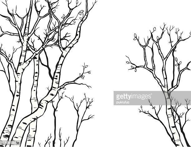 aspen line art - aspen tree stock illustrations, clip art, cartoons, & icons